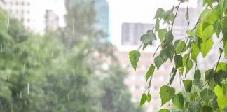Forecasters promised bad weather in the early summer nearly the whole of Russia