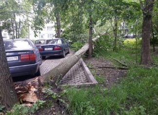 In Moscow from-for a strong wind has fallen more than 60 trees