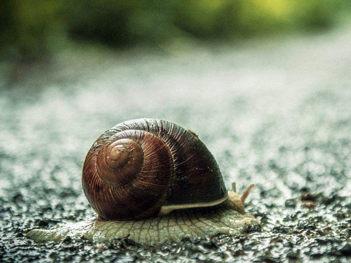 Gardeners told how easy it is to get rid of snails and slugs on the plot