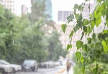 In Moscow is rain, wind gusts of