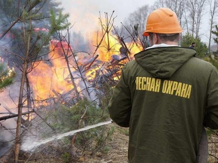 In the Khabarovsk territory are burning about 5.5 thousand hectares of protected forest