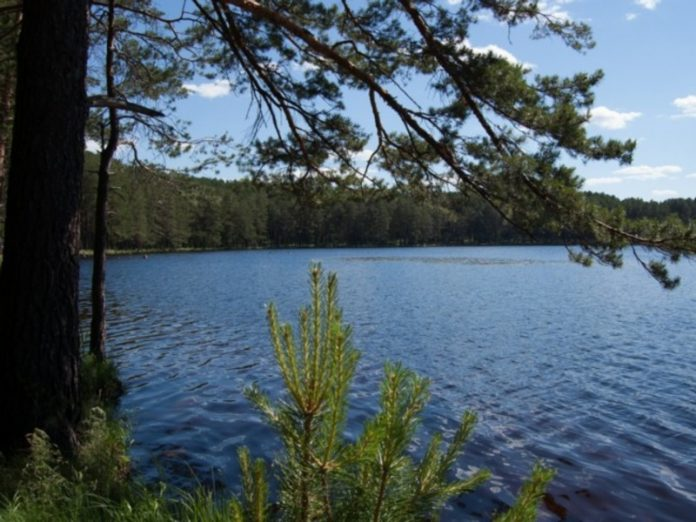 In the Leningrad region, the CPS found 10 bodies of water where you can swim, when they open the beaches