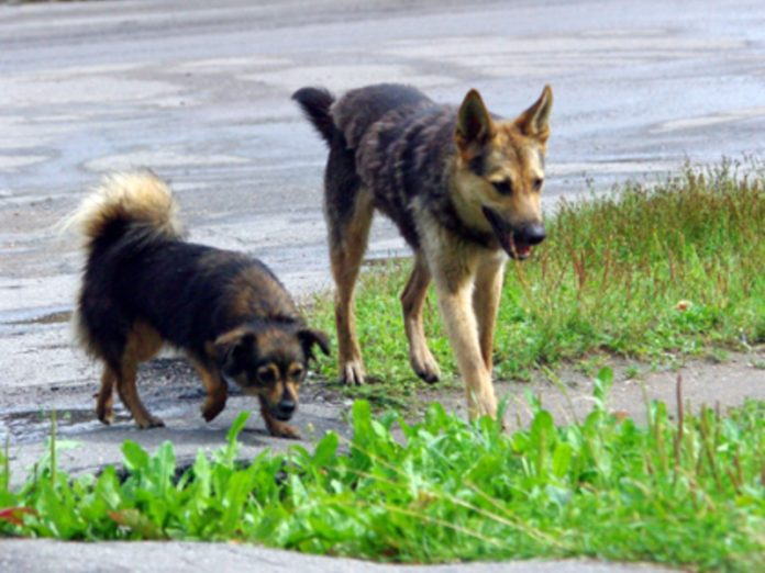 In Zlatoust the child had to escape from a pack of stray dogs, climbing to the top of the swing