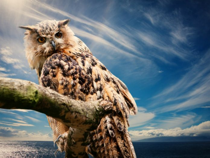 Network users were delighted with the owl-