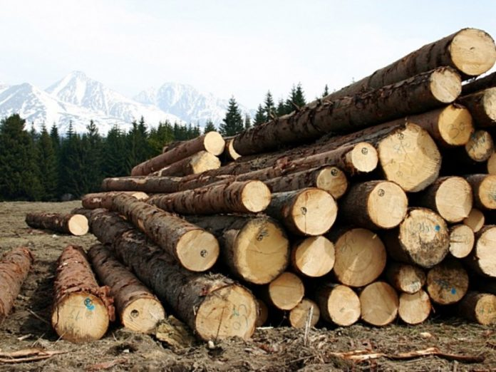 Officials were missing billion hectares of Russian forests