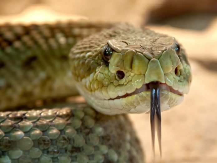 On the waterfront in St. Petersburg, a child bitten by a Viper, he's in intensive care
