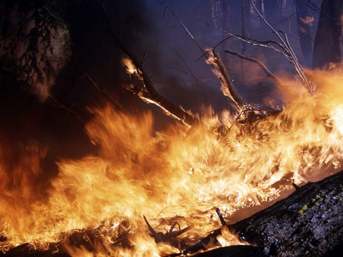 Scientists have warned of the threat of fires in the Tunguska reserve