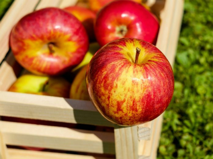 Scientists: to Reduce the risk of heart attack and stroke will help the apples