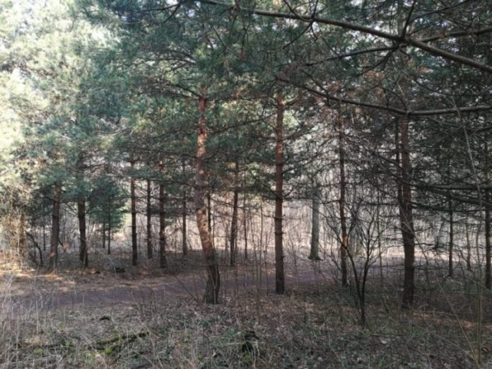 St. Petersburg extended the ban on visits to forests