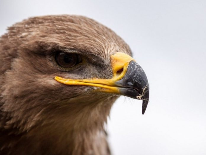 The interior Ministry of Dagestan is interested in the reports of beatings with a stick of red eagle