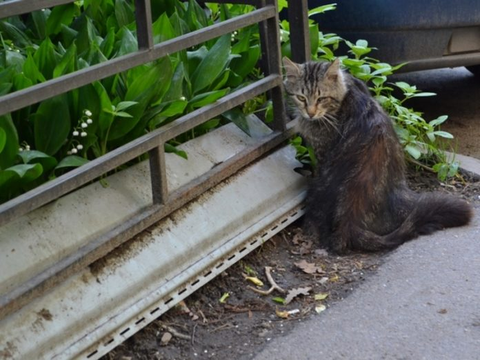The Ministry of construction will leave a basement of cats