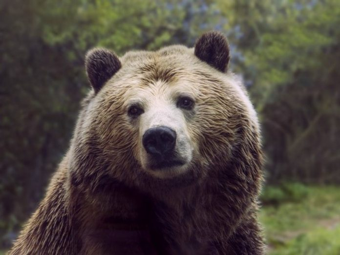 The US authorities were allowed to hunt and kill bears, wolves and deer in national parks of Alaska