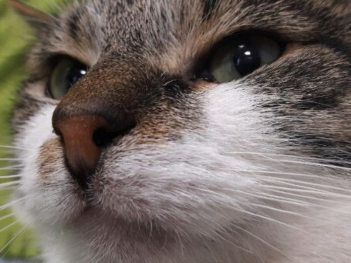 A Muscovite complained to the police for the murder of a domestic cat