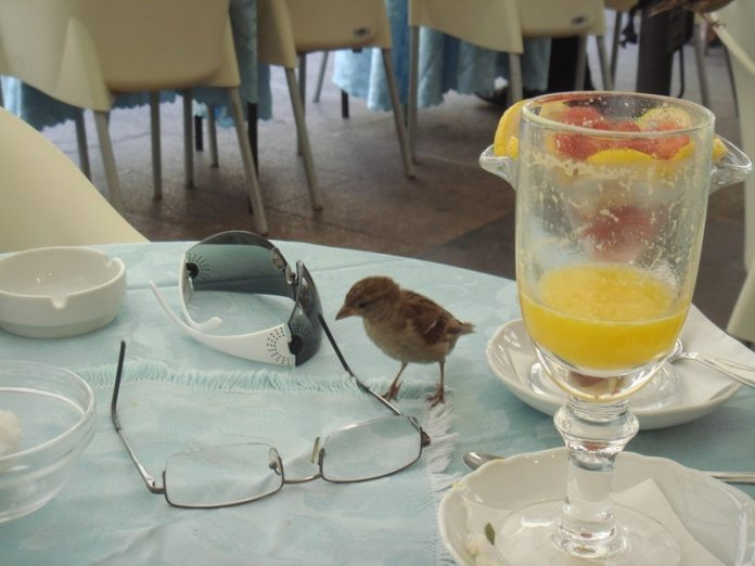 Almost half of St. Petersburg restaurateurs refused to place summer cafe