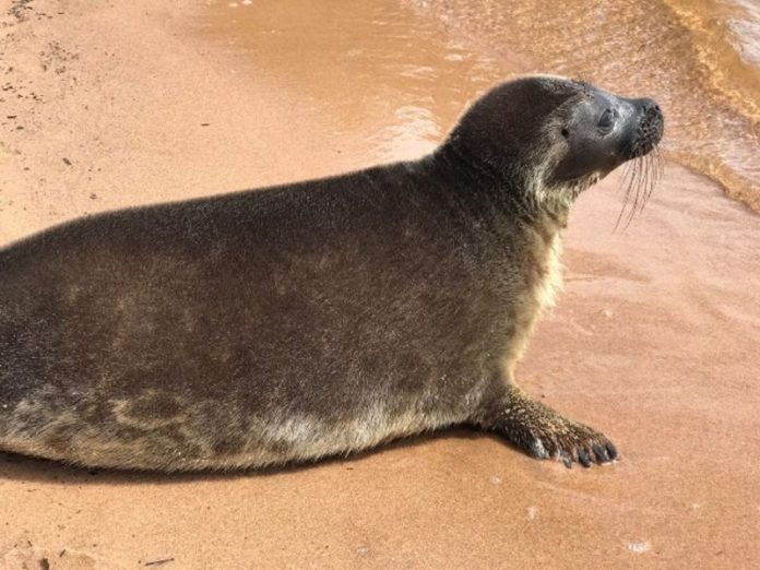 Another pet rescue centre pinnipeds did not want to go to freedom (photo)