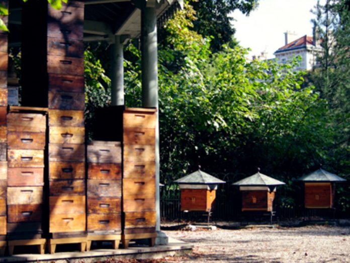 Beekeepers will be able to count on state support