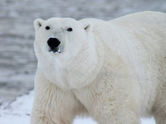 Director of FBK said that the second officer of the Fund was sent to serve to the polar bears — now on Chukotka