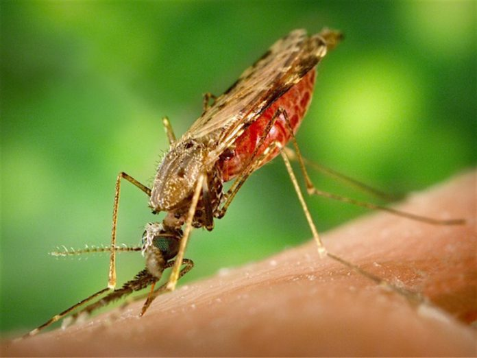 Finnish scientists found a new species of mosquito vectors of malaria
