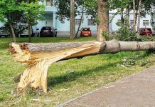 In St. Petersburg appeared affected by the storm