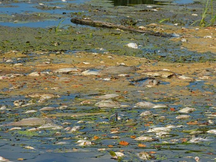 In the Kurgan region was a mass death of fish in the river Iset