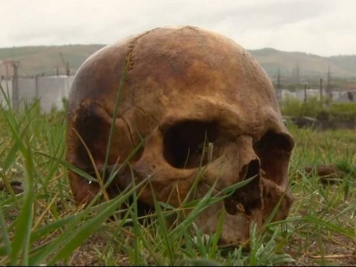 In the Leningrad region, the woman was brought to the country in the ground with human bones and skull