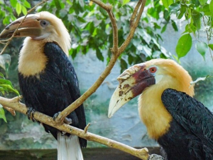 In the Moscow zoo was first hatched chick hornbills (photo)