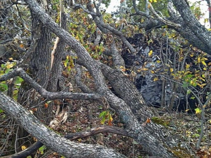 In the Vladimir region, the wind knocked down more than 90 trees
