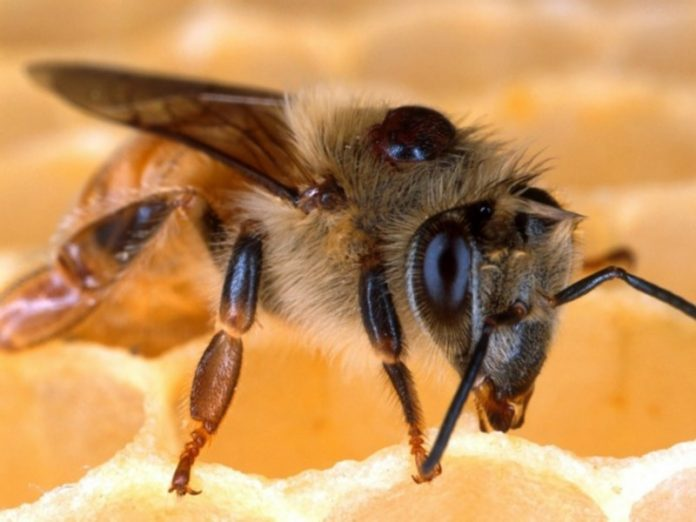 In two districts of Kuzbass there was a mass death of bees