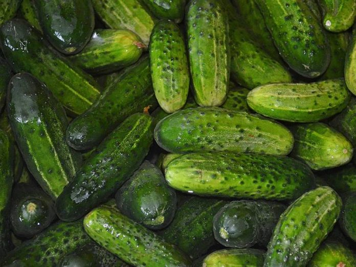 It became known about the amazing properties of cucumber