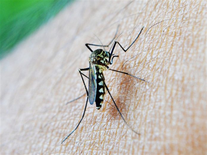 Muscovites warned about the appearance of gadflies and horseflies