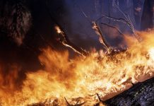 Near Saratov the shepherd rescued from the fire, the cows, and he was burned alive