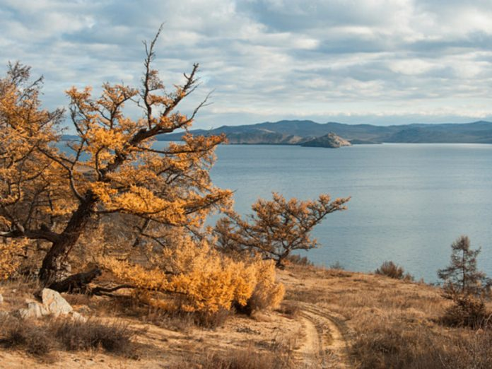 Putin has allowed to cut down forests near lake Baikal