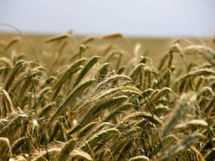 Scientists and businessmen outlined the immediate future of domestic agriculture