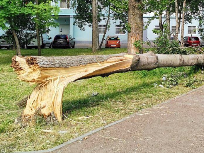Strong wind in Moscow has tumbled down more than 60 trees