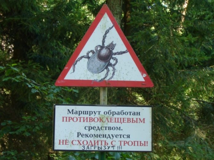 The CPS said that in some districts of St. Petersburg mites often bite people