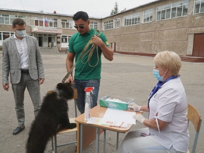 The Deputy Director of the zoo in Barnaul led to the vote on the amendments bear